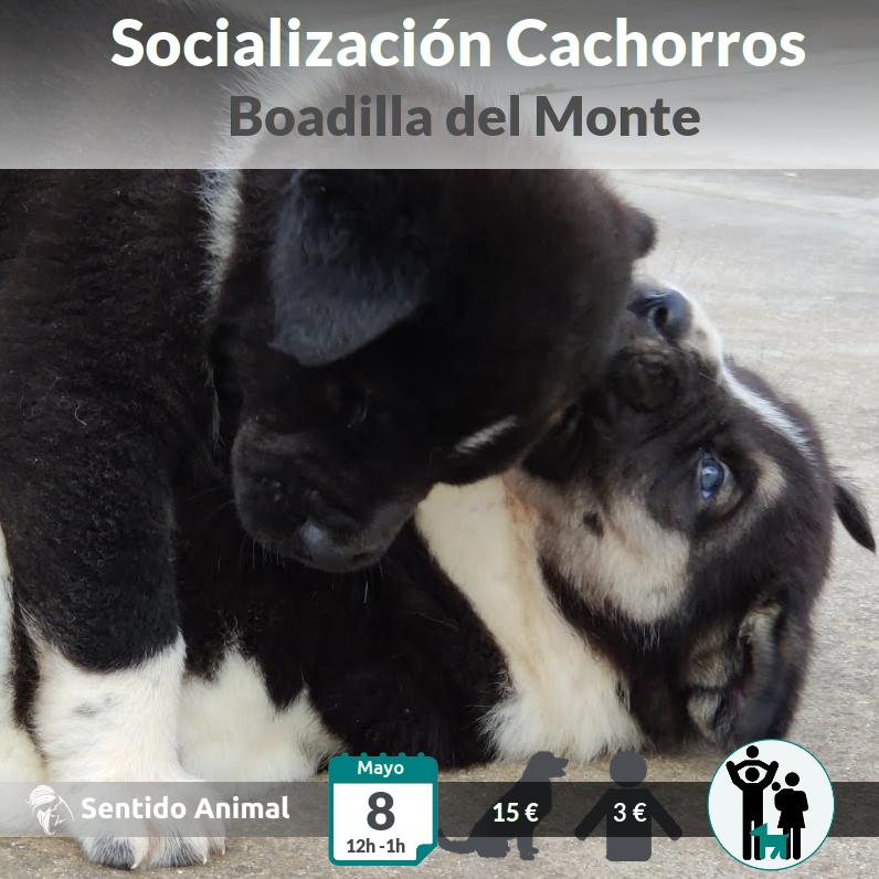 Socialización canina de cachorros