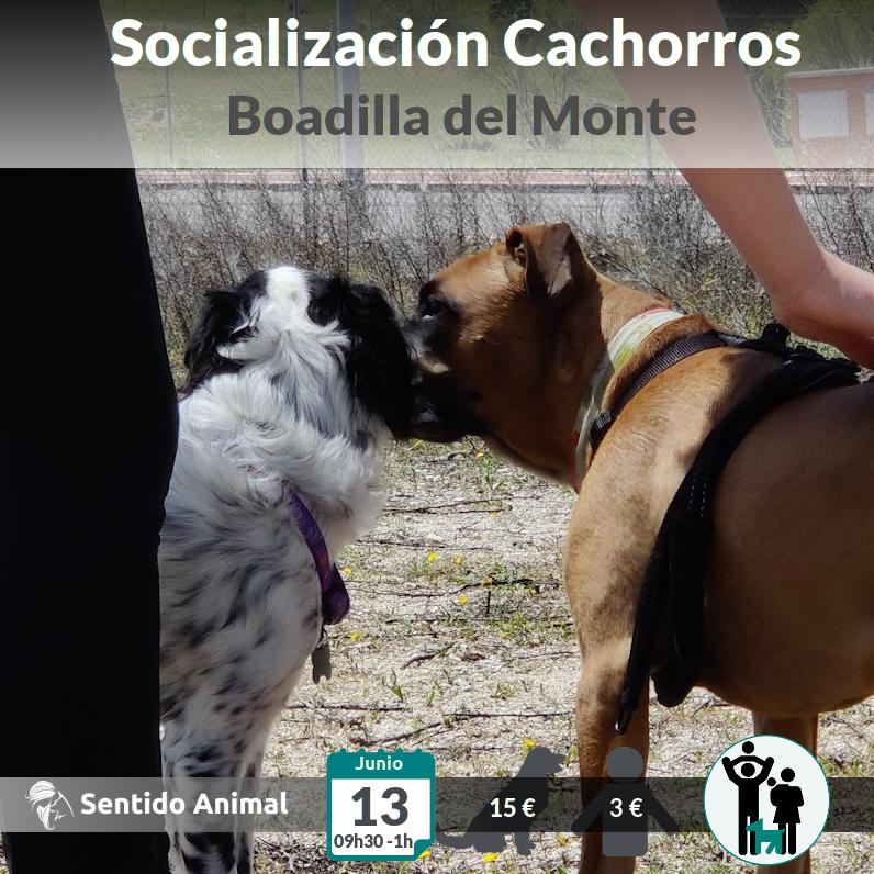 Socialización cachorros – jun21