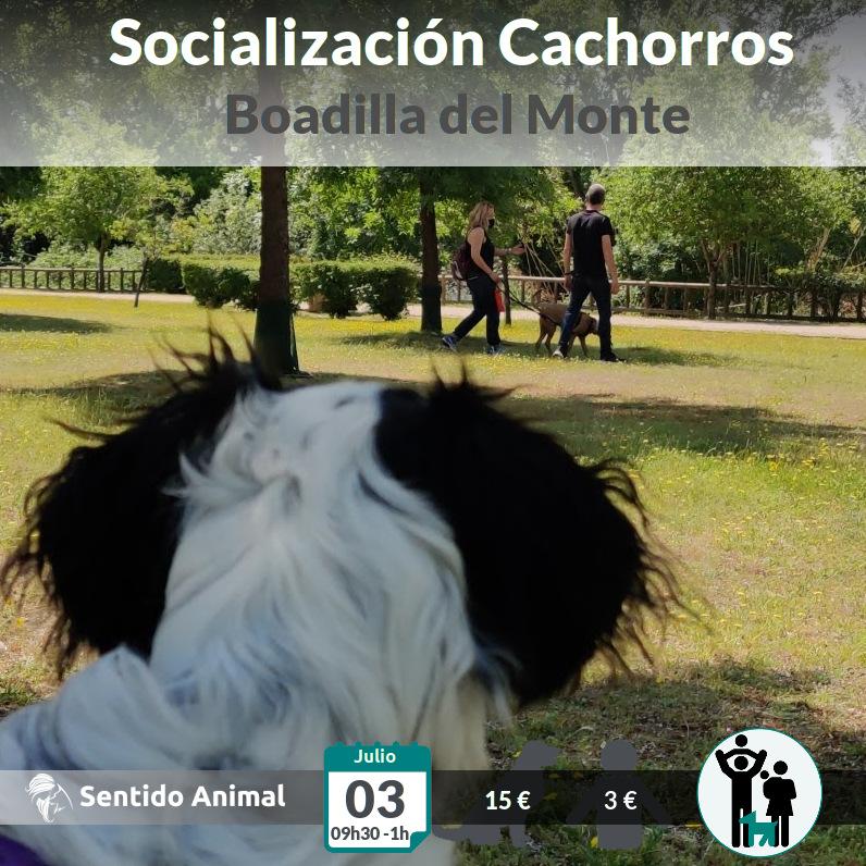 Socialización cachorros – jul21