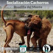 Salida de socialización de cachorros - Boadilla del Monte. Educación canina para cachorros