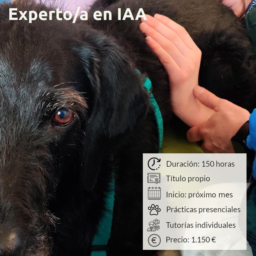 Curso online de Experto en Intervenciones Asistidas con Animales
