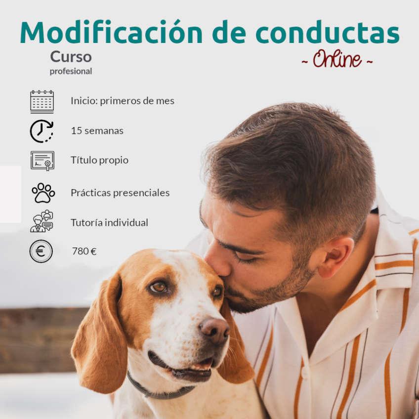Curso profesional de modificación de conducta canina online