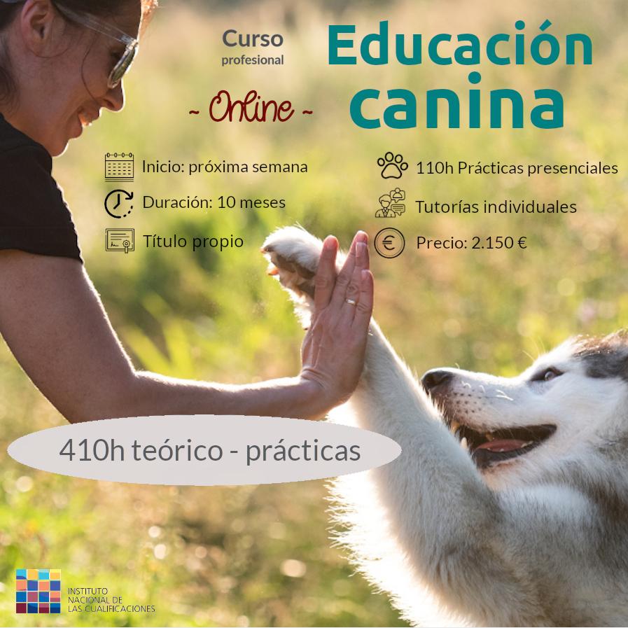 Curso profesional de Educador canino ONLINE