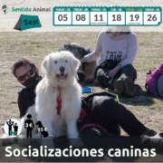 Salidas de Socialización canina - septiembre 2021