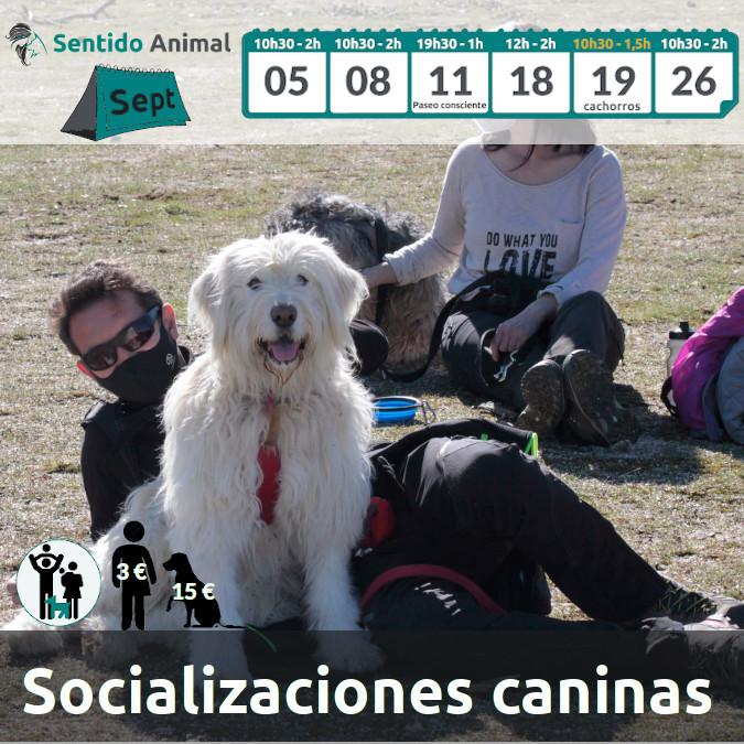 Socialización canina y paseo – septiembre 2021