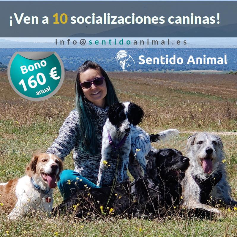 Bono_salidas de socialización canina