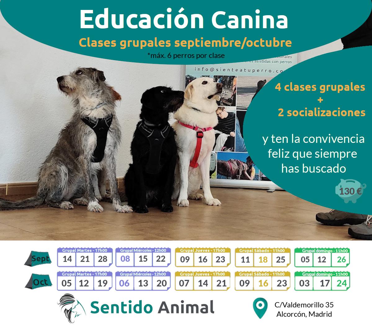 Clases grupales: educación canina – sept21