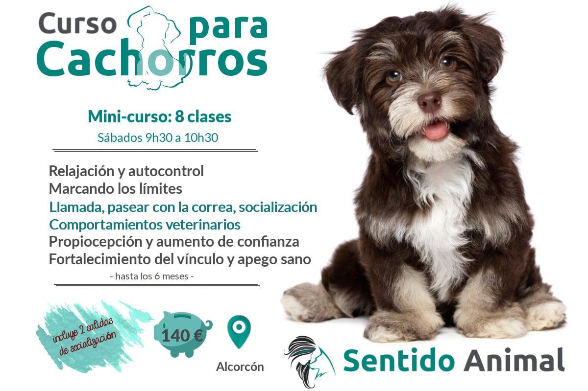 Mini-curso: cachorros y perros jóvenes