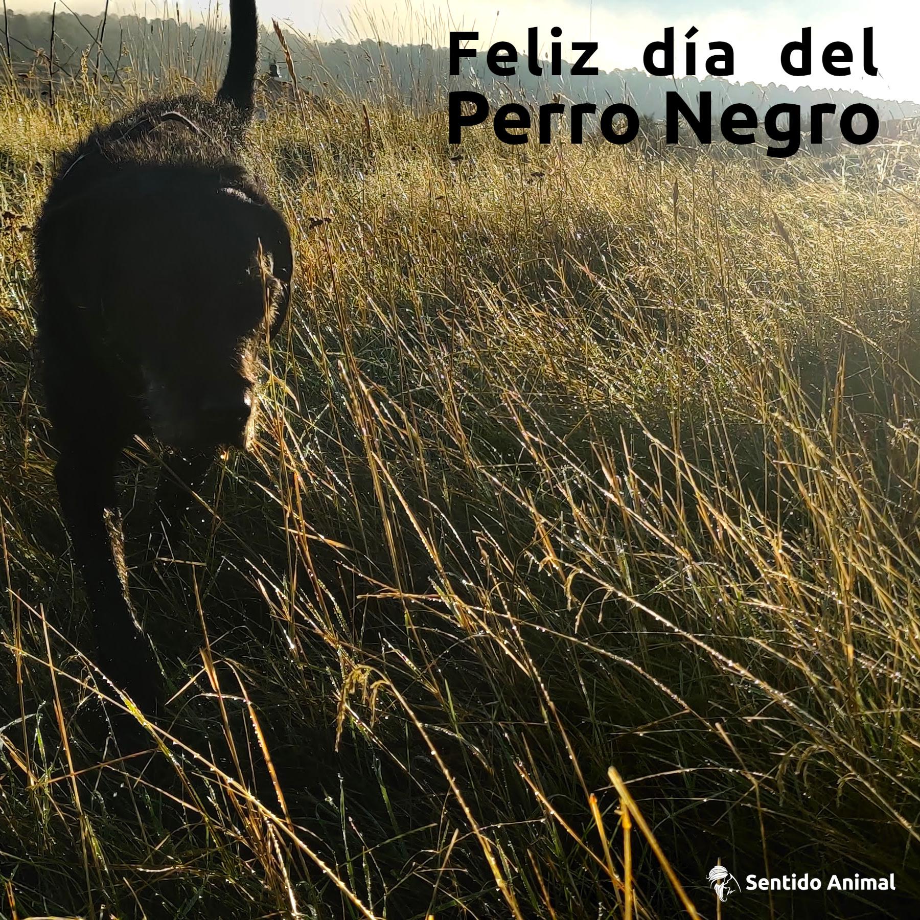 Día del perro negro