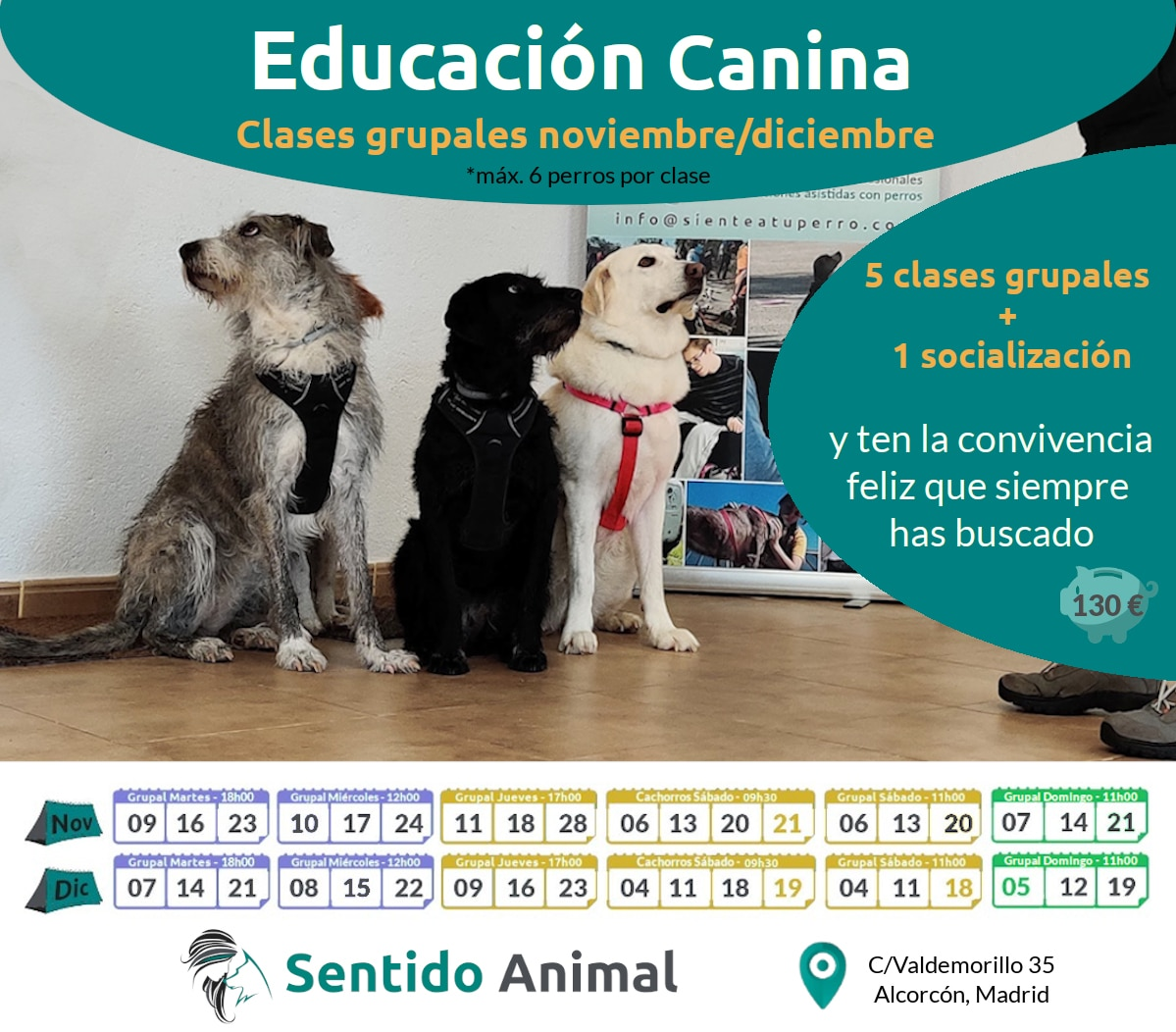 Mini-Curso de clases de educación canina – martes – nov21